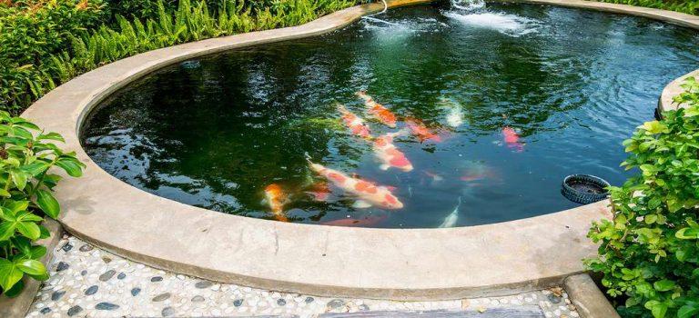Comment choisir un bassin de jardin?